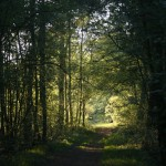 de weg naar het bos