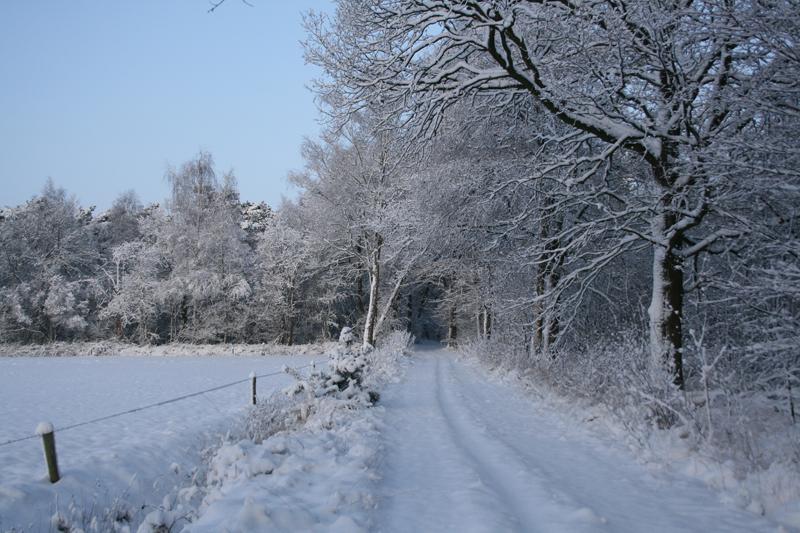 pad naar het bos